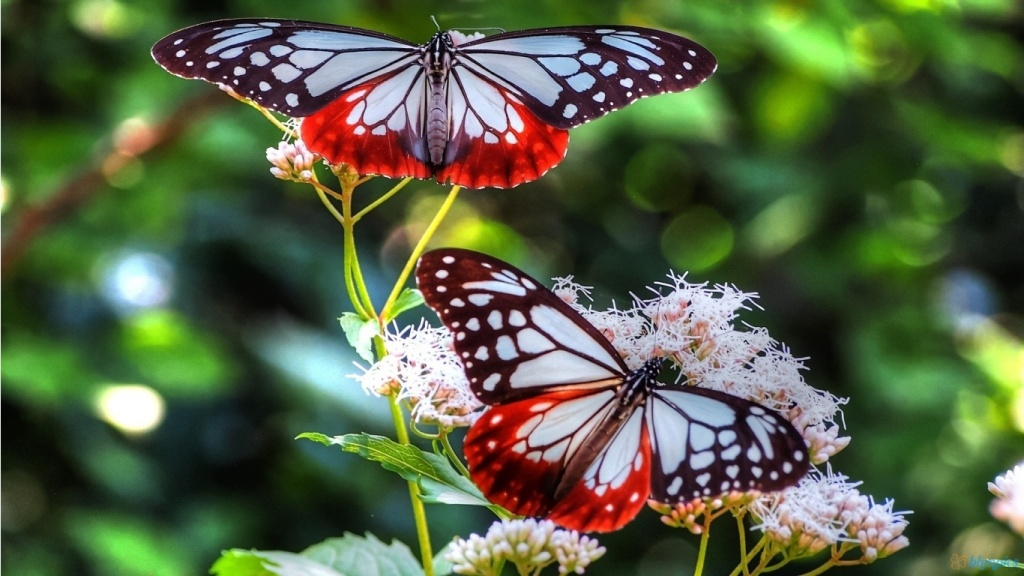 two lovely butterflies